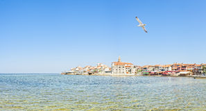 Costa adriatica in Umag Croazia fotografia stock