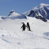 Costa antártica imagen de archivo