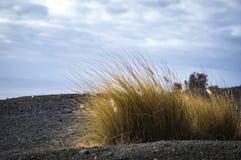 Costa atlantica rocciosa dell'isola di Gran Canaria, Spagna Lungo giallo Fotografia Stock Libera da Diritti