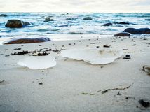 Costa costa báltica cerca de Tallin Tabasalu, Estonia, Países Bálticos, prados de la playa foto de archivo libre de regalías