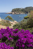 Costa Brava beach coast with purple flowers on the foreground Royalty Free Stock Photography