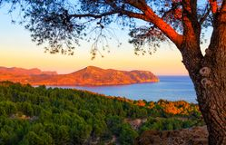 Costa Brava coast in Spain at dusk. Costa Brava coast in late afternoon with sunset and tree in foreground Stock Photo