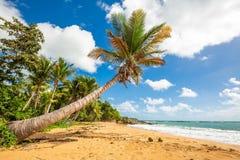 Costa carribean exótica da praia de Puerto Rico Flamenco fotos de stock royalty free