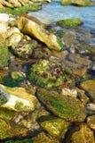 Costa com as pedras com algas marinhas. imagem de stock royalty free
