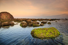 Costa com rochas e musgo Foto de Stock