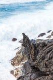 Costa con las piedras del flujo volcánico Fotos de archivo libres de regalías