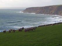 Costa costa de Cornualles cerca de Trewavas Foto de archivo libre de regalías