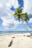 Costa costa de Idealic el Caribe Imágenes de archivo libres de regalías
