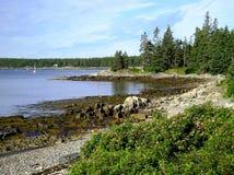 Costa costa de Maine Foto de archivo libre de regalías