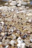 Costa costa del lago shells Imagen de archivo libre de regalías