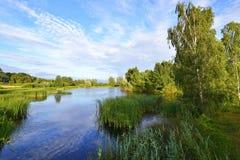 Costa costa del río con los árboles Fotos de archivo libres de regalías