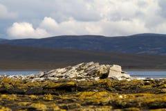 Costa costa Falkland Islands Fotografía de archivo