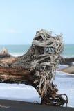 Costa costa rugosa de Nueva Zelanda Fotografía de archivo
