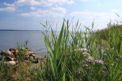 Costa da baía do disco, Polônia Fotografia de Stock