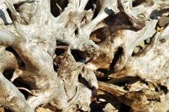 Costa da central do close up da madeira lançada à costa Imagens de Stock