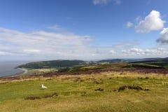 Costa da gaivota e do Exmoor, Malsmead Imagem de Stock Royalty Free