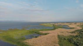 A costa da lagoa de Vistula coberta com as precipitações vídeos de arquivo
