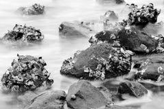 Costa da rocha Foto de Stock