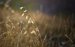 Costa da Web da grama e de aranha no sol da manhã fotos de stock