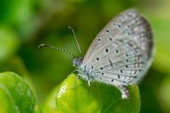 Costa das borboletas acima Fotos de Stock Royalty Free