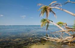 A costa das caraíbas de Costa Rica fotos de stock royalty free