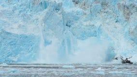 Costa de Alaska do Oceano Pacífico do fluxo do gelo da geleira de Aialik filme