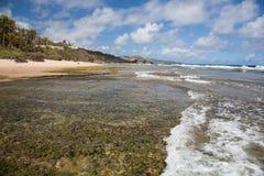 Costa de Barbados imagem de stock
