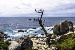 Costa de Big Sur/punto de Pescadero en la impulsión de 17 millas Fotos de archivo