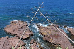Costa de Kiama Foto de Stock