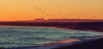 Costa de la Argentina fotografía de archivo libre de regalías