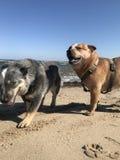 Costa costa de la GEN del ¼ de la isla RÃ con el perro imágenes de archivo libres de regalías