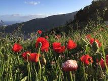 Costa de la isla de Madeira Fotos de archivo