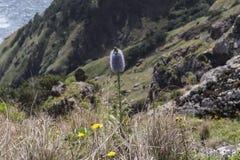 Costa de la isla de Madeira Imágenes de archivo libres de regalías