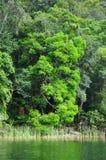 Costa de la selva Imagen de archivo libre de regalías