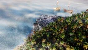Costa de las naves de podadoras Fotos de archivo