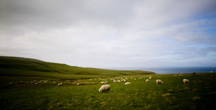 Costa de las ovejas Foto de archivo libre de regalías