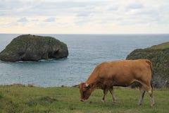 Costa de Llanes Asturias, Spanien Arkivbild