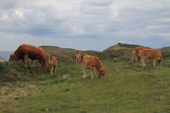 Costa de Llanes, Asturies, Espagne photographie stock libre de droits