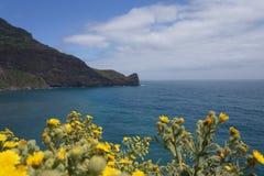 Costa de Madeira con las flores amarillas imagen de archivo libre de regalías