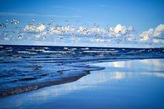 Costa de mar azul com ondas e gaivotas imagem de stock royalty free