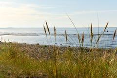 Costa de mar Báltico Foto de Stock