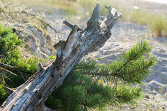 Costa de mar Báltico Fotos de Stock