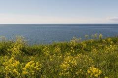 Costa de mar Báltico Imagens de Stock