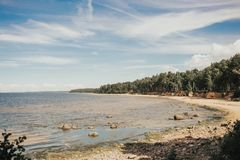 Costa de mar con la arena y el abedul amarillos en verano latvia Fotografía de archivo