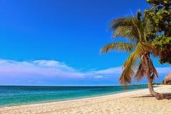 Costa de mar das caraíbas Imagem de Stock