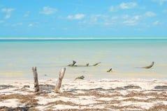 Costa de mar das caraíbas da ilha de Holbox fotografia de stock