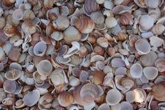 Costa de mar dos shell Fotografia de Stock Royalty Free