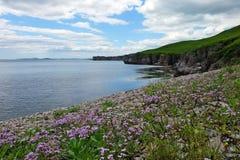 Costa de mar, flores foto de stock royalty free
