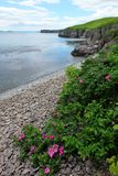 Costa de mar, flores imagem de stock royalty free