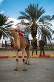 COSTA DE MAR MORTO, ISRAEL - 19 DE NOVEMBRO DE 2011: O homem senta um camelo Fotos de Stock